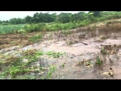 The Moss-Strong farm was badly affected by heavy rains brought by Tropical Storm Zeta.
