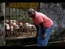Devon Gray is serious about pig rearing.