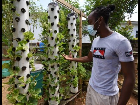 Shandae Bascoe explains how vegetables grow in his soilless aeroponics towers.